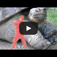 Image to: The Turtle Freeze — Черепаха и заход на гелик